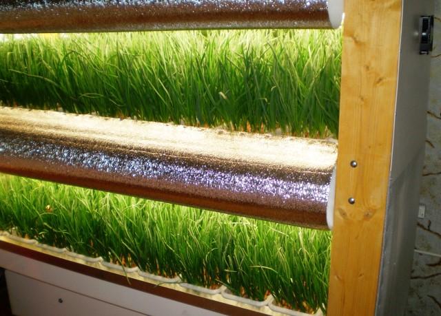 Выбор места для выращивания зелени зависит от финансовых возможностей бизнесмена