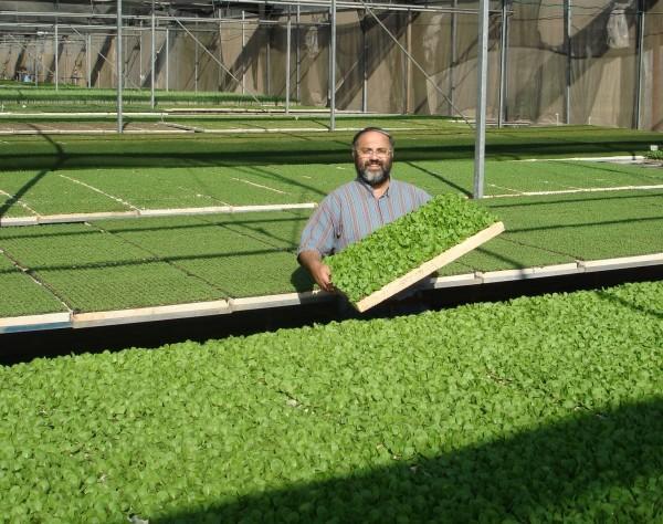 Круглогодичное выращивание зелени потребует покупки необходимого оборудования